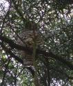 Owl_eml01